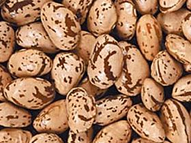 Фасоль – диетическое питание с нашей