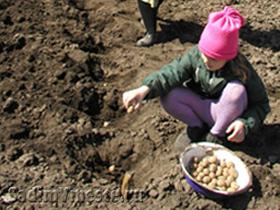 Огород когда сажать картофель 122