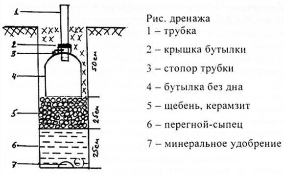 Схема дренажа для полива и подкормки винограда